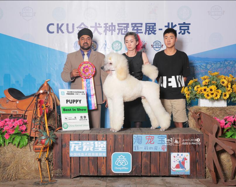 challenger8月北京2.png