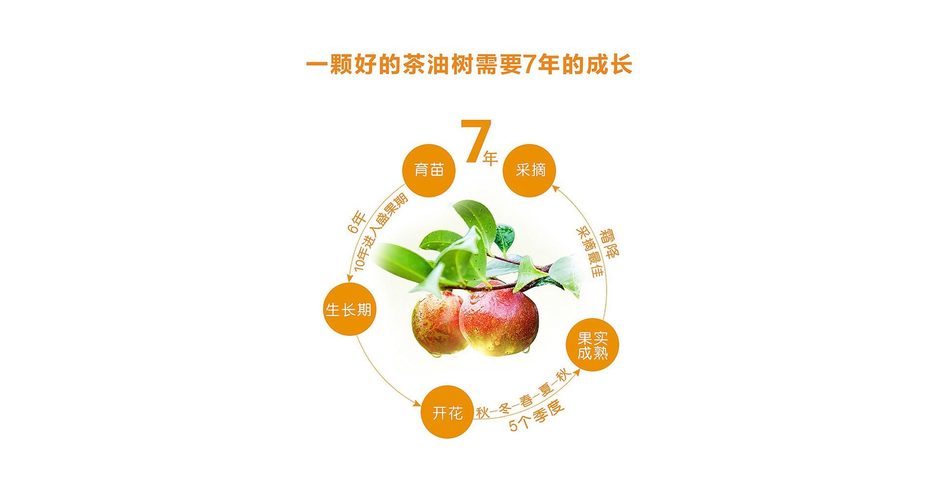 鼎城茶油_0011.JPG