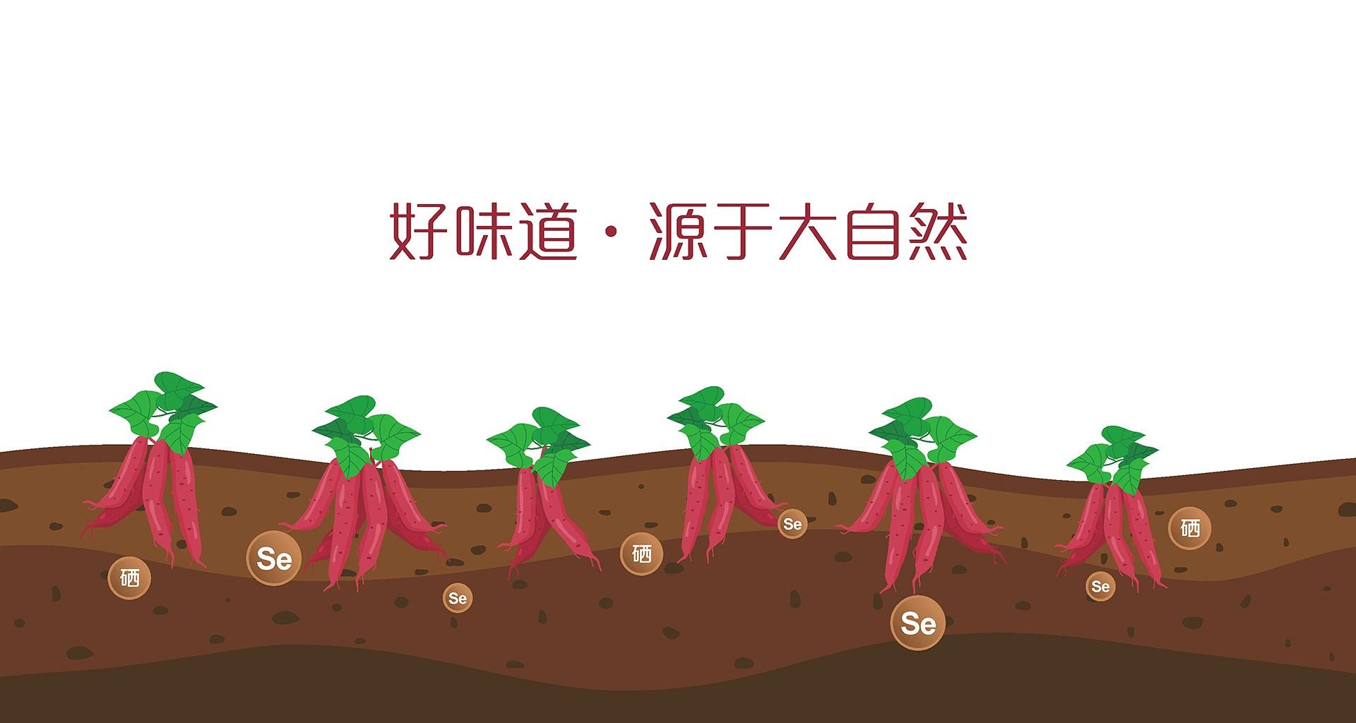 资兴板栗薯新万博竞彩app苹果下载万博manbetx手机版苹果下载_0010.JPG