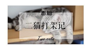 毒柚二猫打架记