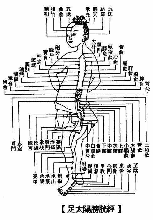膀胱經.jpg