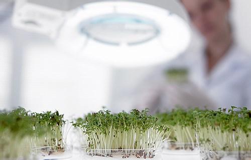 激光植物光合作用燈
