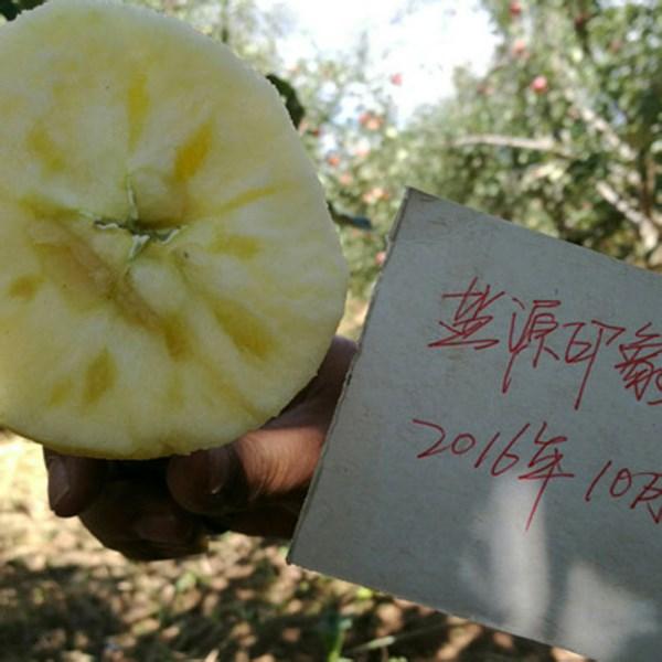 大凉山丑苹果