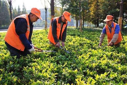 园林绿化养护.jpg