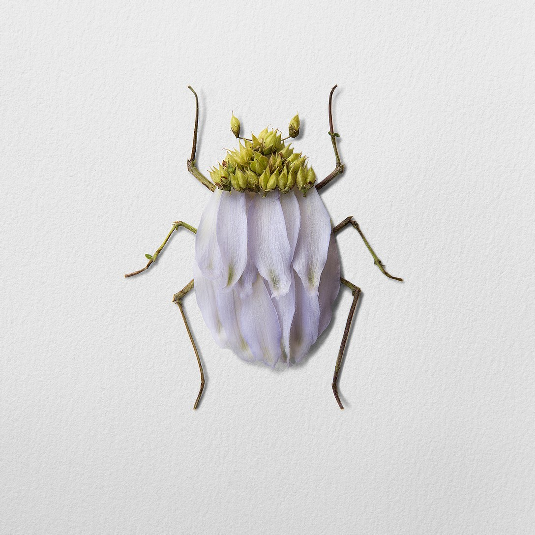 1創意昆蟲 (8).jpg