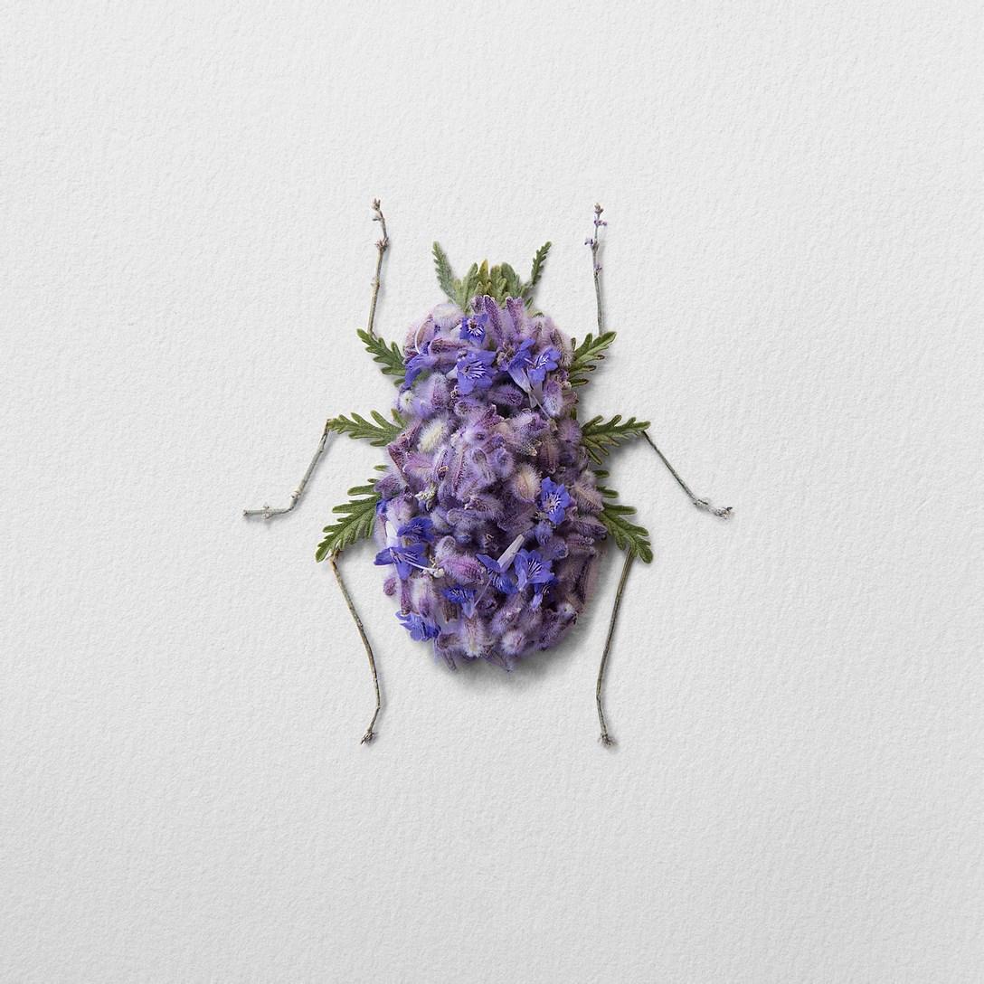1創意昆蟲 (11).jpg